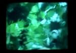 Green Canopy, Paul Winkler, Sydney, 1994, 24mins
